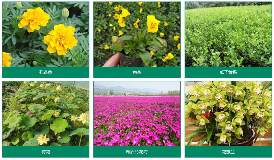 青州志天花卉苗木有限公司