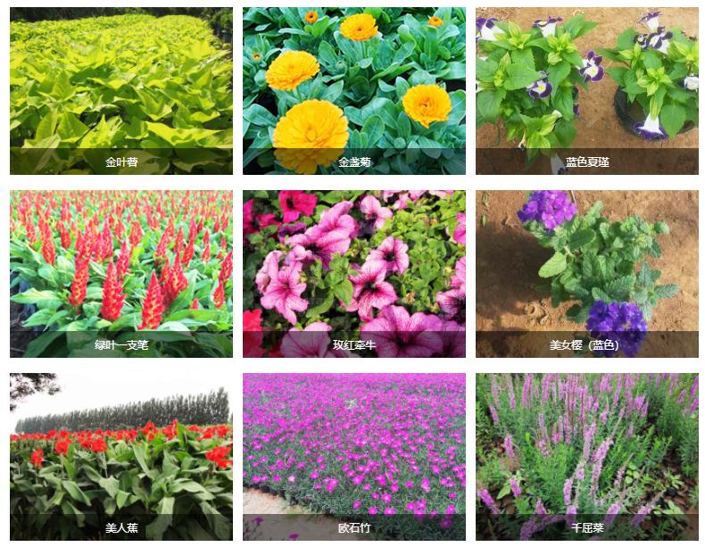 青州市盈科花卉苗木有限公司