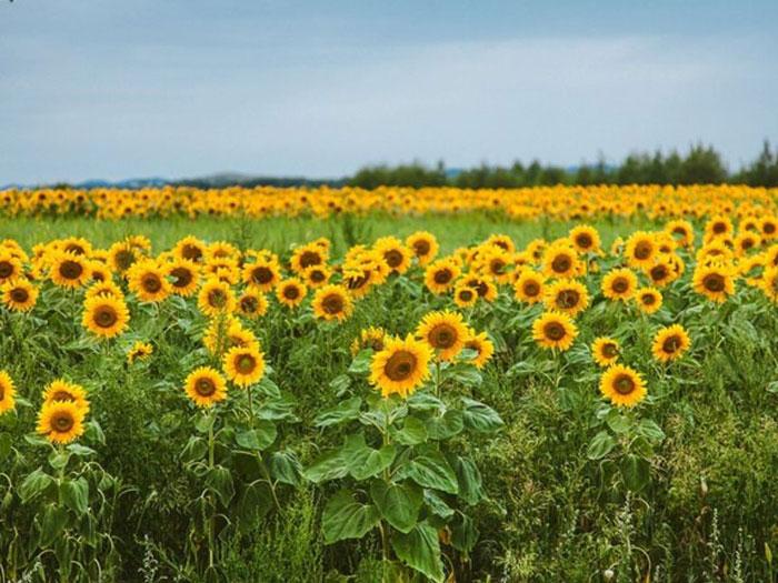 不同种类花卉对肥料的需求有哪些差异?