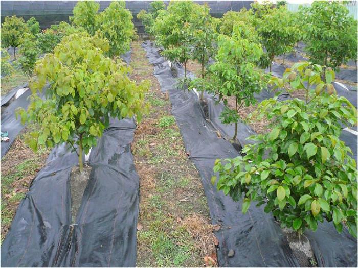 果园防草布